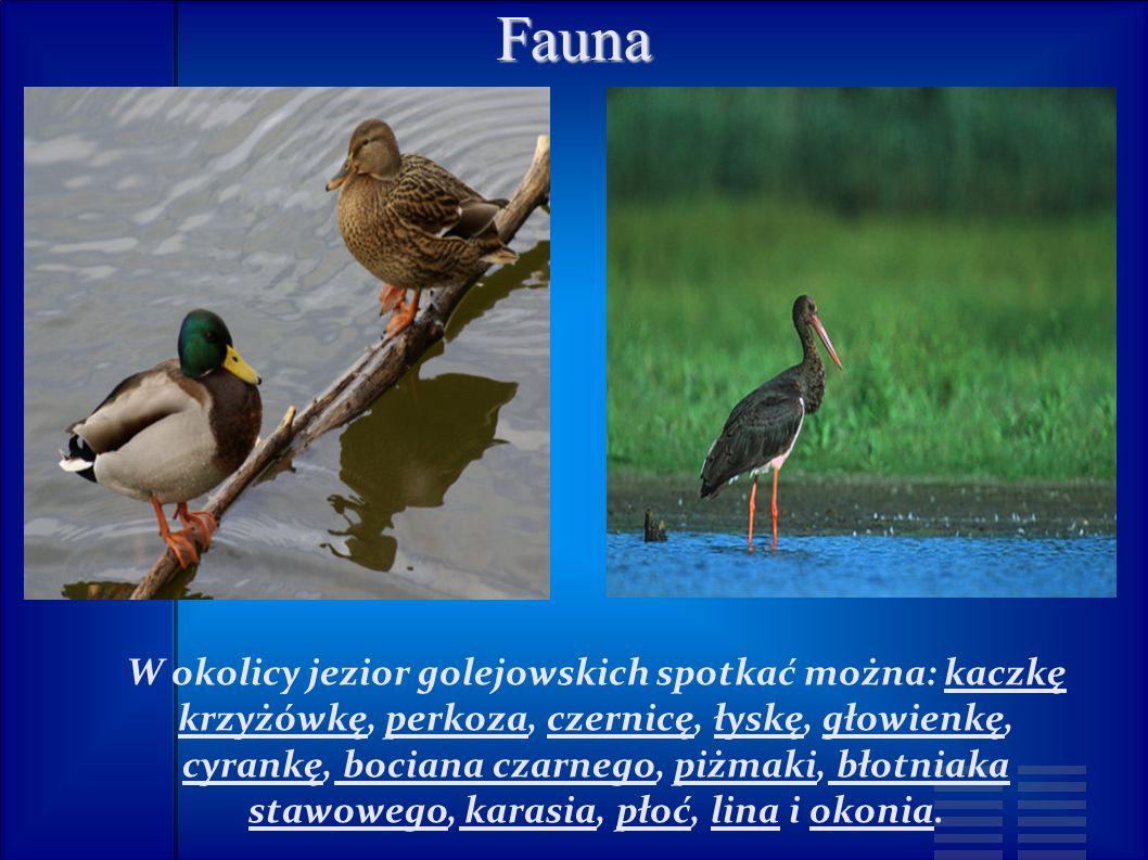 Fauna W okolicy jezior golejowskich spotkać można: kaczkę krzyżówkę, perkoza, czernicę, łyskę, głowienkę, cyrankę, bociana czarnego, piżmaki, błotniaka stawowego, karasia, płoć, lina i okonia.