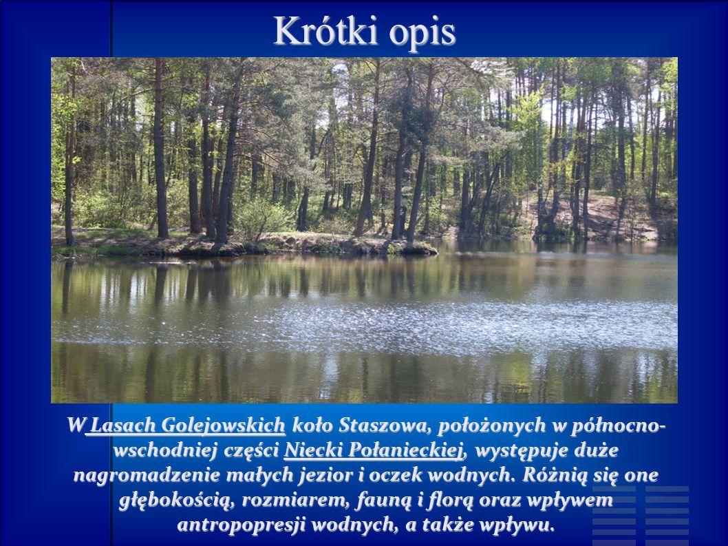 Krótki opis W Lasach Golejowskich koło Staszowa, położonych w północno- wschodniej części Niecki Połanieckiej, występuje duże nagromadzenie małych jezior i oczek wodnych.