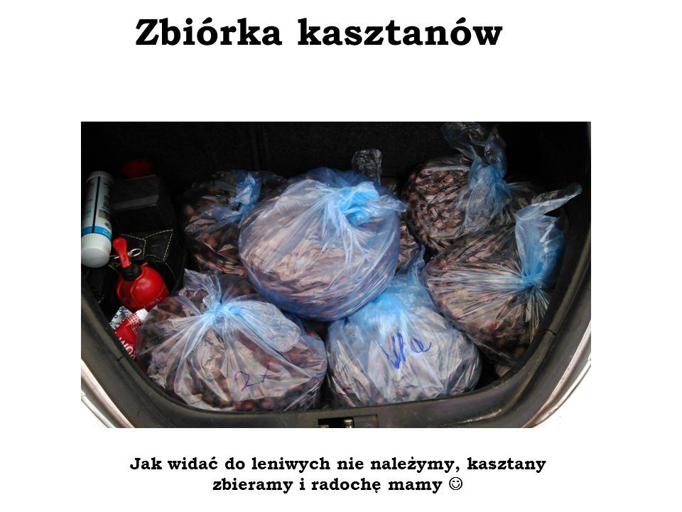 Zbiórka kasztanów Jak widać do leniwych nie należymy, kasztany zbieramy i radochę mamy