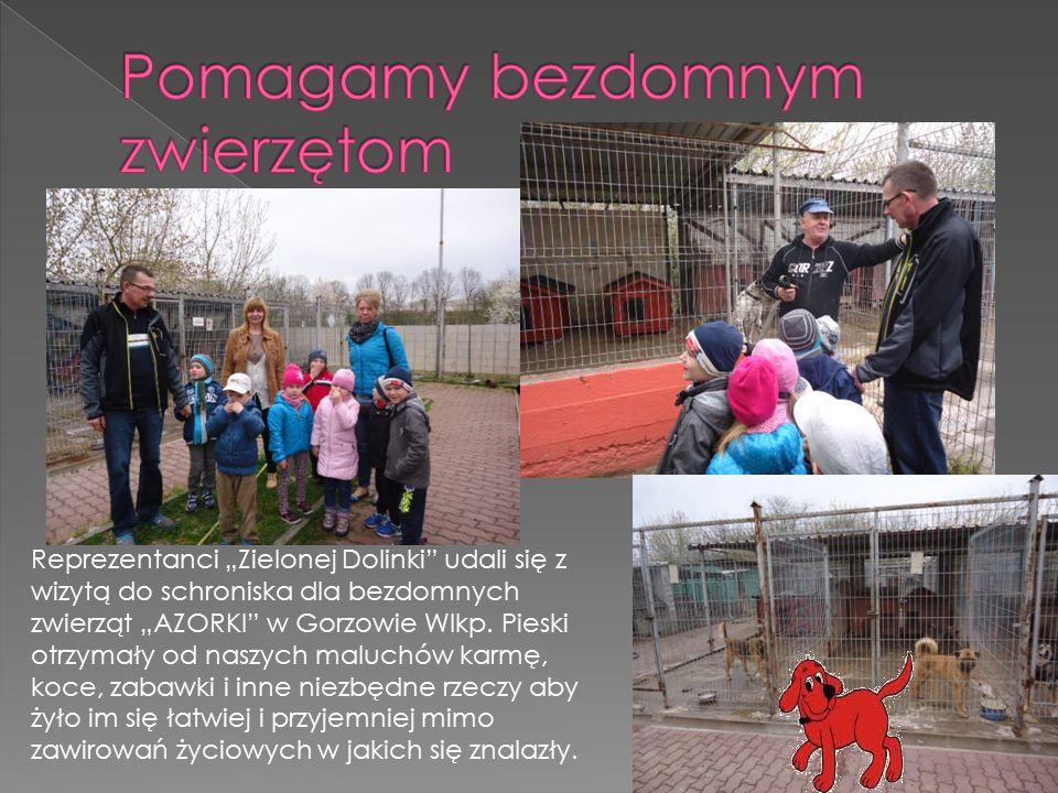 """Reprezentanci """"Zielonej Dolinki"""" udali się z wizytą do schroniska dla bezdomnych zwierząt """"AZORKI"""" w Gorzowie Wlkp. Pieski otrzymały od naszych maluch"""