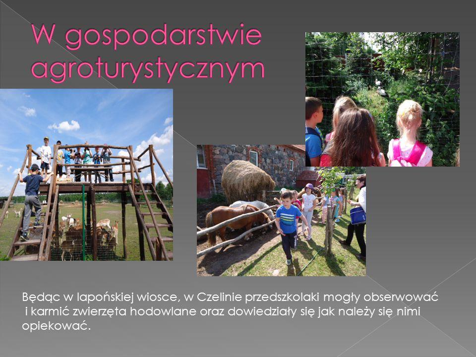 Będąc w lapońskiej wiosce, w Czelinie przedszkolaki mogły obserwować i karmić zwierzęta hodowlane oraz dowiedziały się jak należy się nimi opiekować.