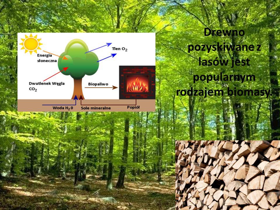 Drewno pozyskiwane z lasów jest popularnym rodzajem biomasy.