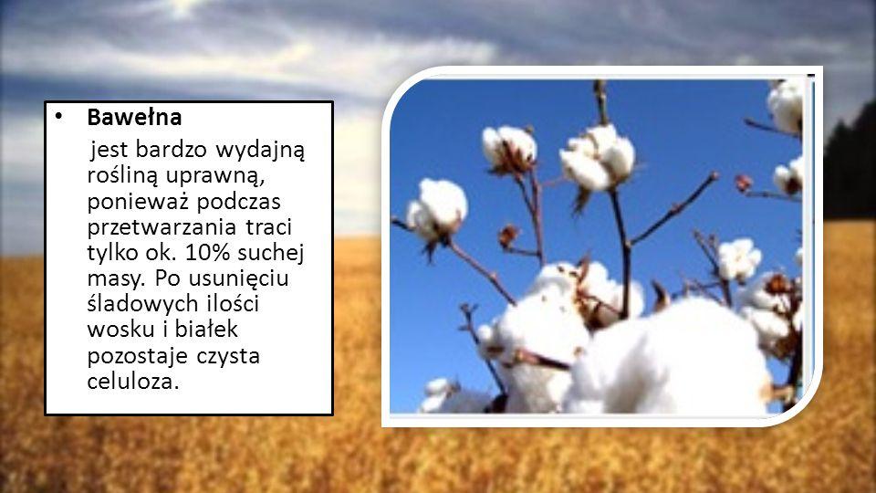 Bawełna jest bardzo wydajną rośliną uprawną, ponieważ podczas przetwarzania traci tylko ok. 10% suchej masy. Po usunięciu śladowych ilości wosku i bia