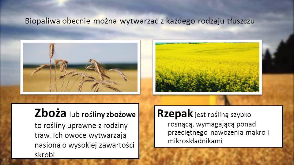 Biopaliwa obecnie można wytwarzać z każdego rodzaju tłuszczu Zboża lub rośliny zbożowe to rośliny uprawne z rodziny traw. Ich owoce wytwarzają nasiona