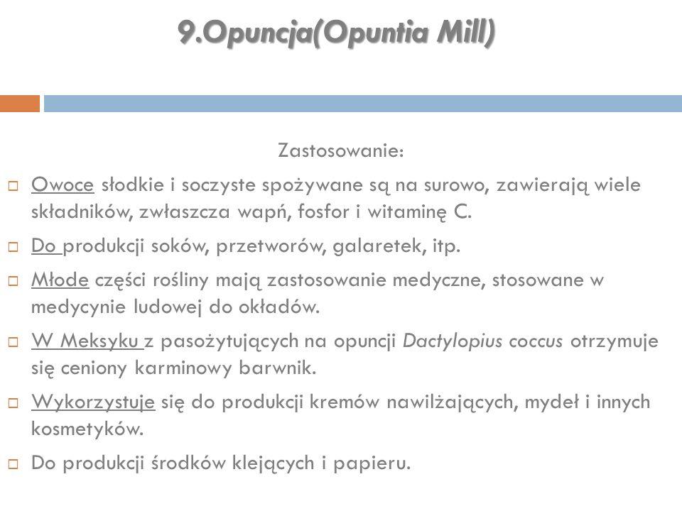 9.Opuncja(Opuntia Mill) Zastosowanie:  Owoce słodkie i soczyste spożywane są na surowo, zawierają wiele składników, zwłaszcza wapń, fosfor i witaminę