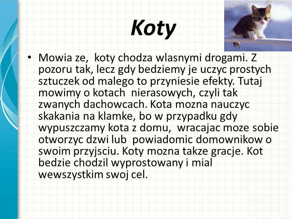 Świnia Tradycyjnie hodowano w Polsce świnie rasy polskiej białej zwisłouchej i innych o lokalnym znaczeniu.
