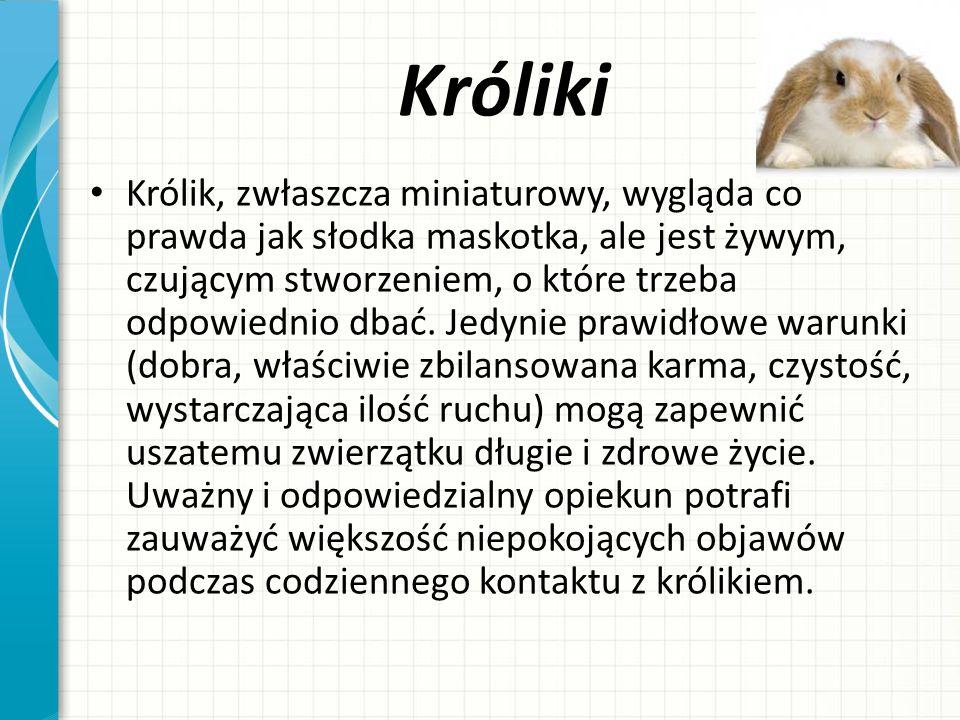 Dzięki za oglądanie! Jakub Borkowski 6Ei