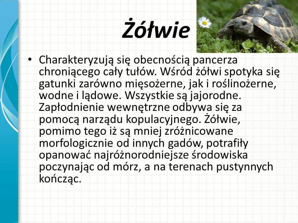 Żółwie Charakteryzują się obecnością pancerza chroniącego cały tułów. Wśród żółwi spotyka się gatunki zarówno mięsożerne, jak i roślinożerne, wodne i