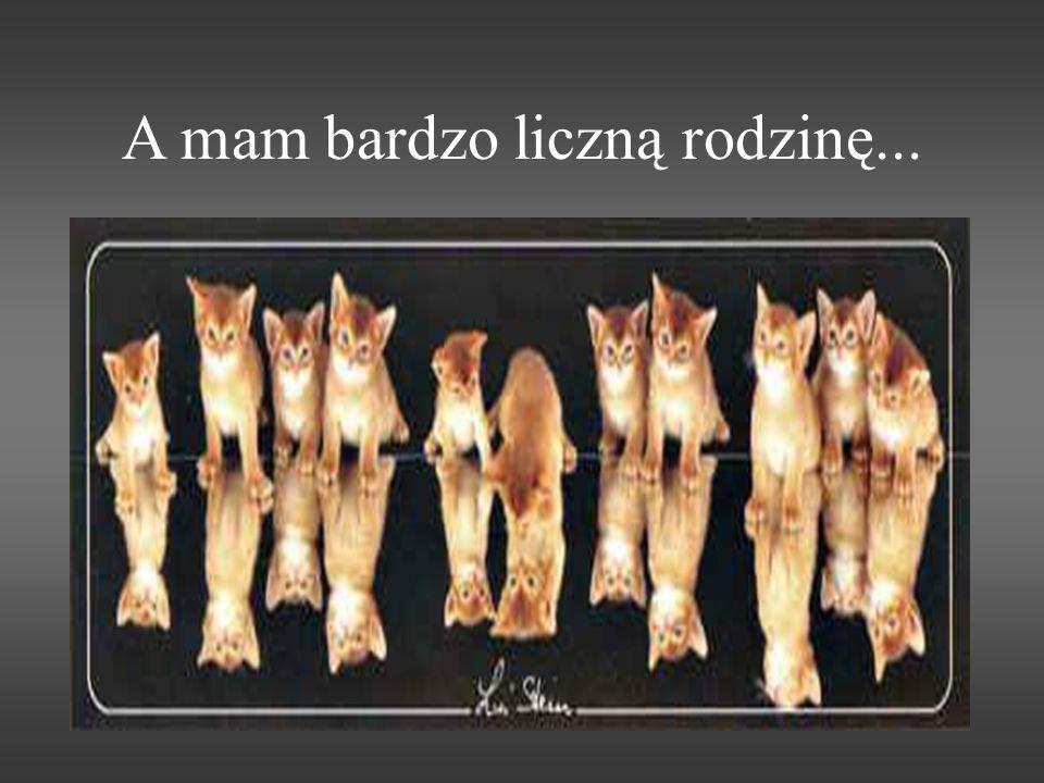 Nazywamy się Kotowate, po łacinie Felidae. (felis to kot, a felix – szczęśliwy...)
