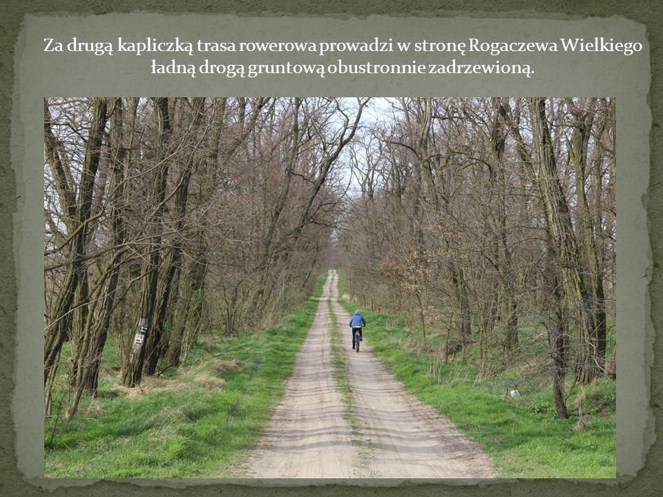 Za drugą kapliczką trasa rowerowa prowadzi w stronę Rogaczewa Wielkiego ładną drogą gruntową obustronnie zadrzewioną.