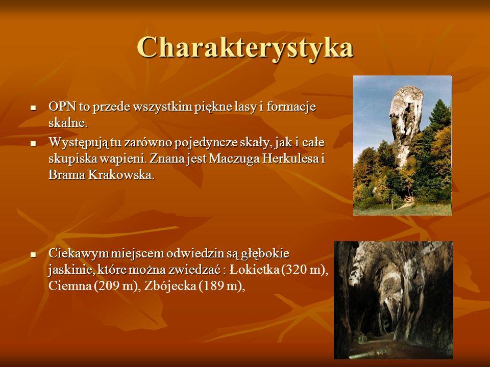 Charakterystyka OPN to przede wszystkim piękne lasy i formacje skalne. OPN to przede wszystkim piękne lasy i formacje skalne. Występują tu zarówno poj