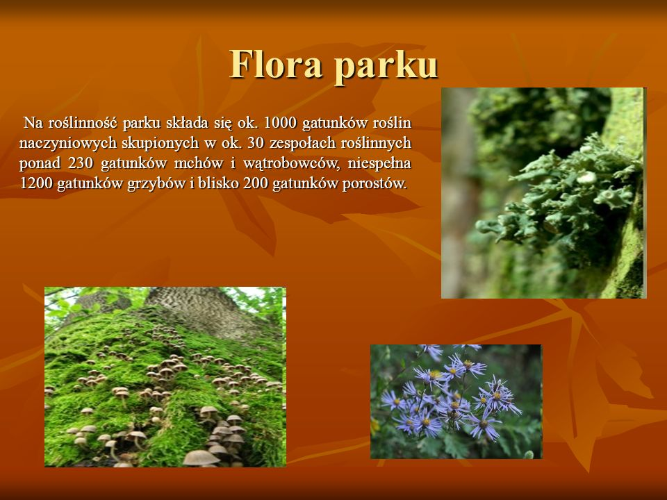 Flora parku Vallis pulcherima et plantis raris ditissima (przepiękna dolina słynąca z rzadkich roślin) - tak napisał o Dolinie Prądnika pierwszy badac