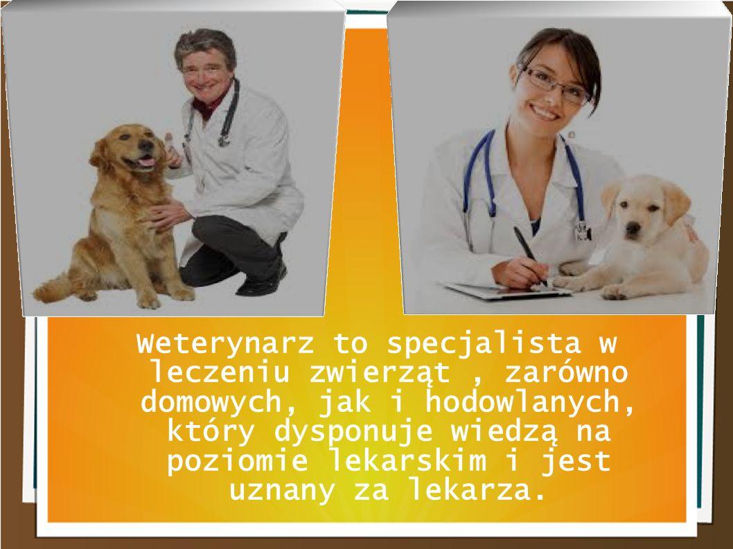 Weterynarz to specjalista w leczeniu zwierząt, zarówno domowych, jak i hodowlanych, który dysponuje wiedzą na poziomie lekarskim i jest uznany za leka