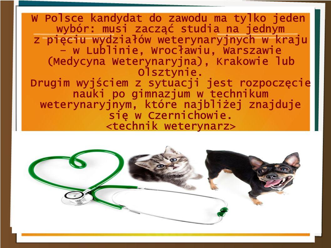 W Polsce kandydat do zawodu ma tylko jeden wybór: musi zacząć studia na jednym z pięciu wydziałów weterynaryjnych w kraju – w Lublinie, Wrocławiu, War