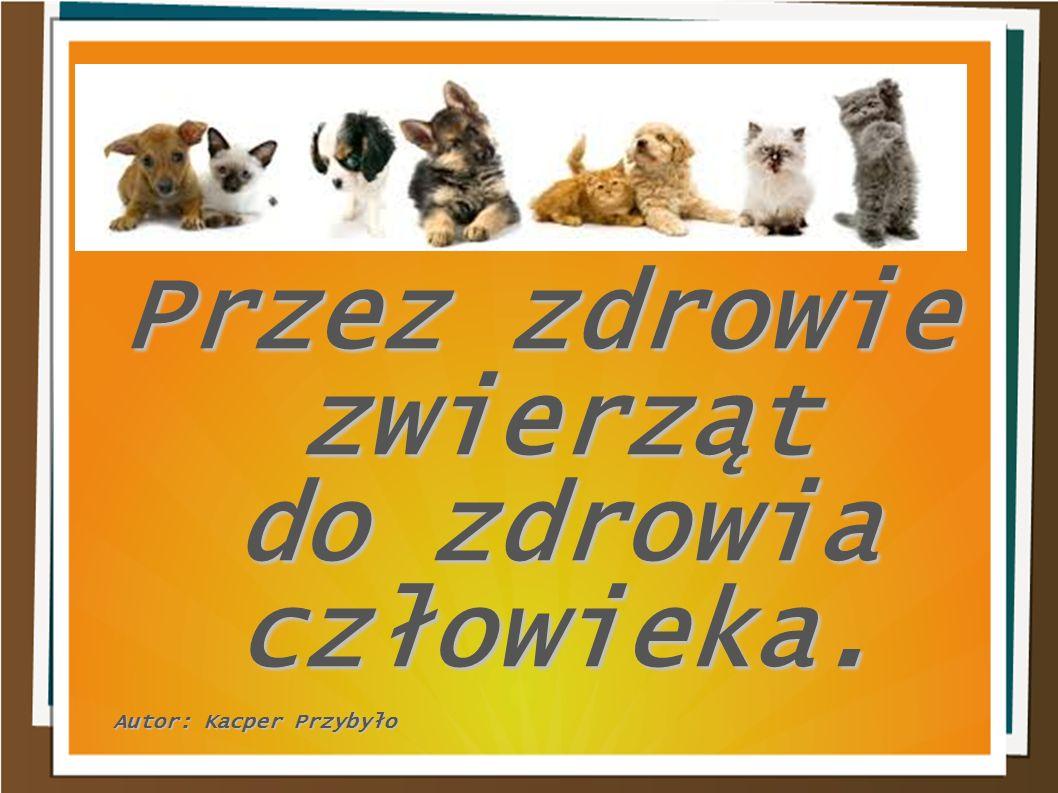 Przez zdrowie zwierząt do zdrowia człowieka. Autor: Kacper Przybyło