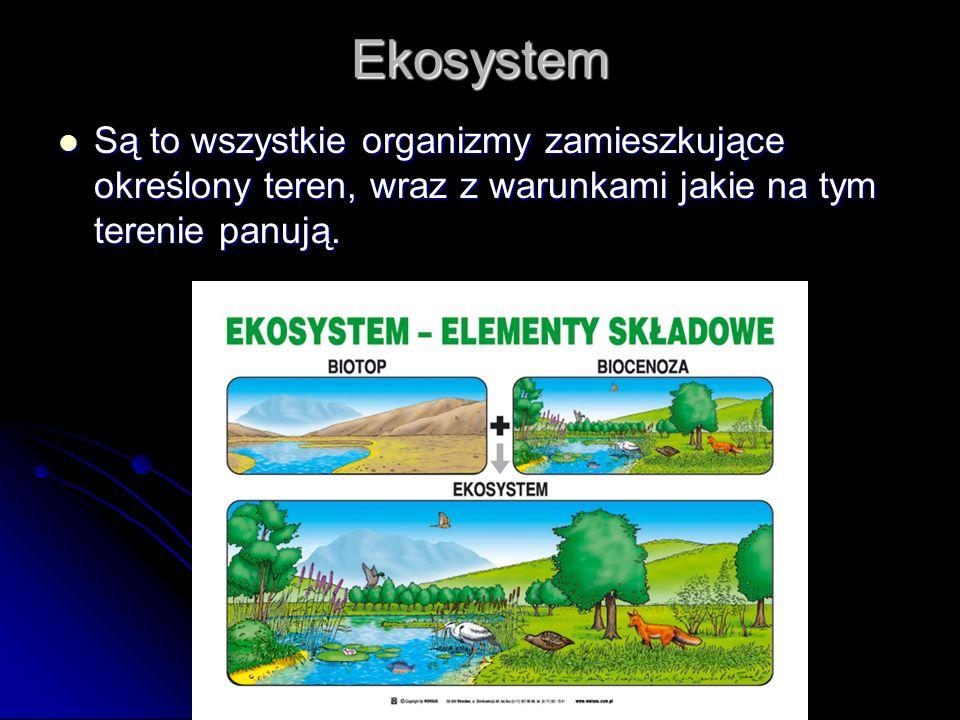 Ekosystem Są to wszystkie organizmy zamieszkujące określony teren, wraz z warunkami jakie na tym terenie panują.