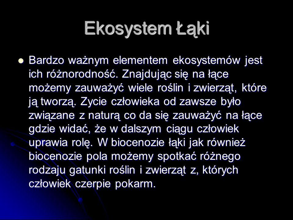 Ekosystem Łąki Bardzo ważnym elementem ekosystemów jest ich różnorodność.
