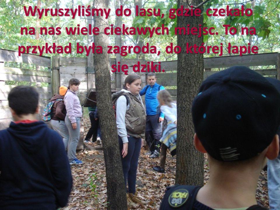 Wyruszyliśmy do lasu, gdzie czekało na nas wiele ciekawych miejsc. To na przykład była zagroda, do której łapie się dziki.