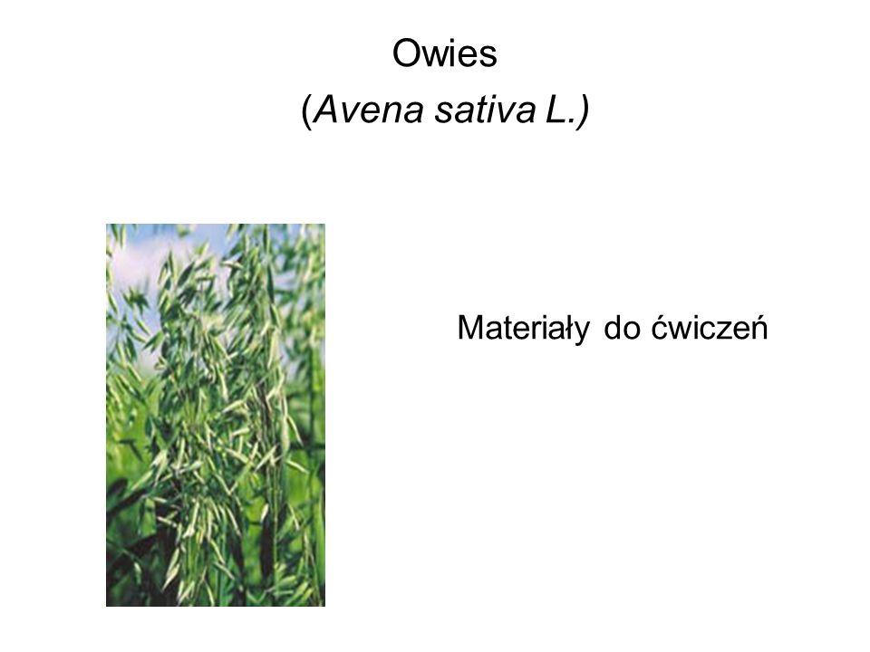 Owies różni się od innych gatunków zbóż składem chemicznym ziarna.