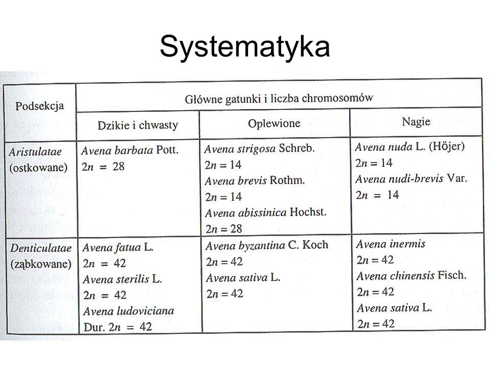 Krajowy rejestr liczy 28 odmian owsa, w tym dwie zagraniczne.