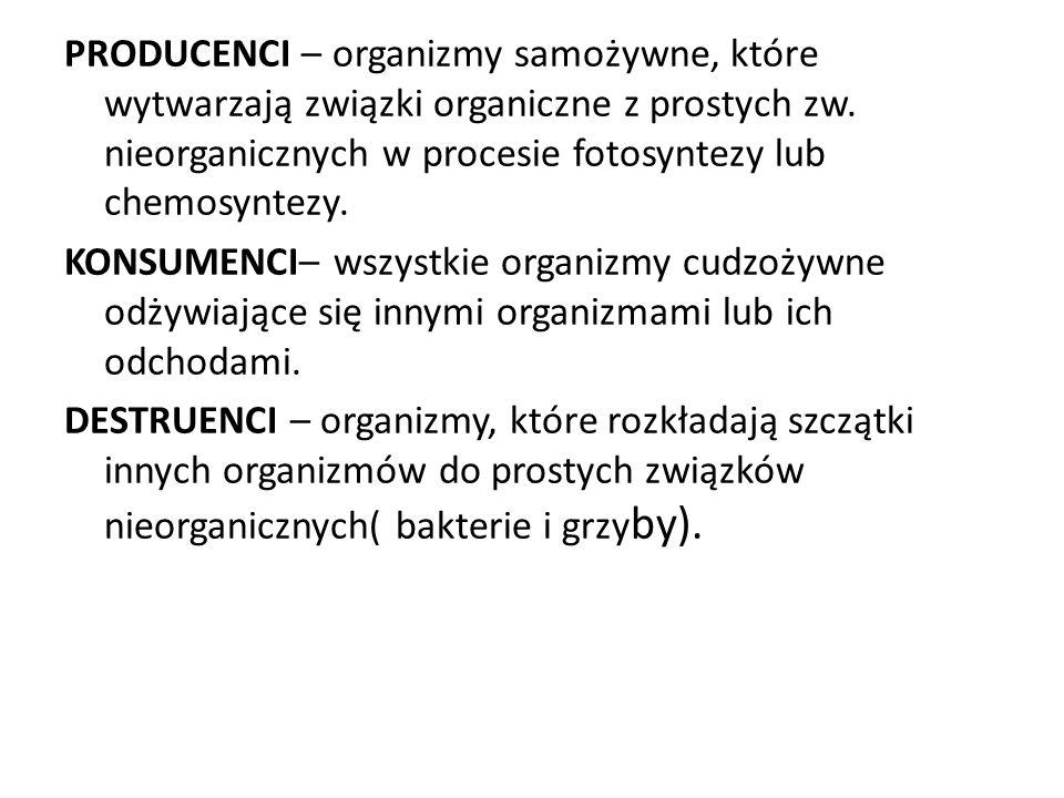 PRODUCENCI – organizmy samożywne, które wytwarzają związki organiczne z prostych zw. nieorganicznych w procesie fotosyntezy lub chemosyntezy. KONSUMEN