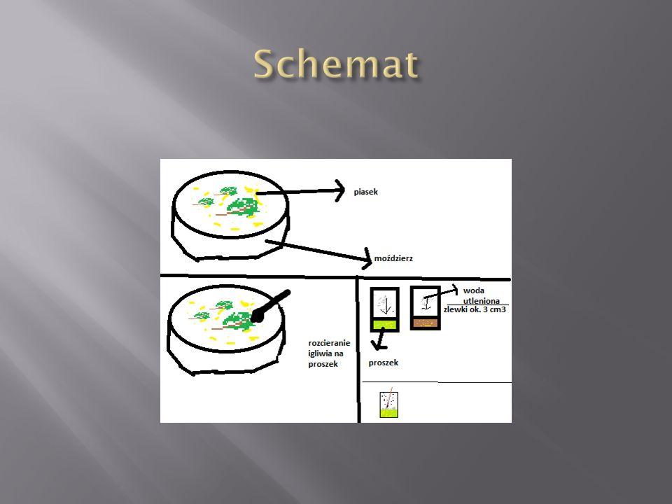  Pęcherzyki gazu wydzielają się intensywnie w mieszaninie zawierającej tylko zielone (zdrowe) igiełki sosny.