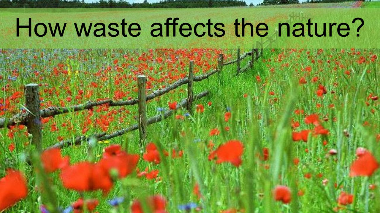How waste affects the nature
