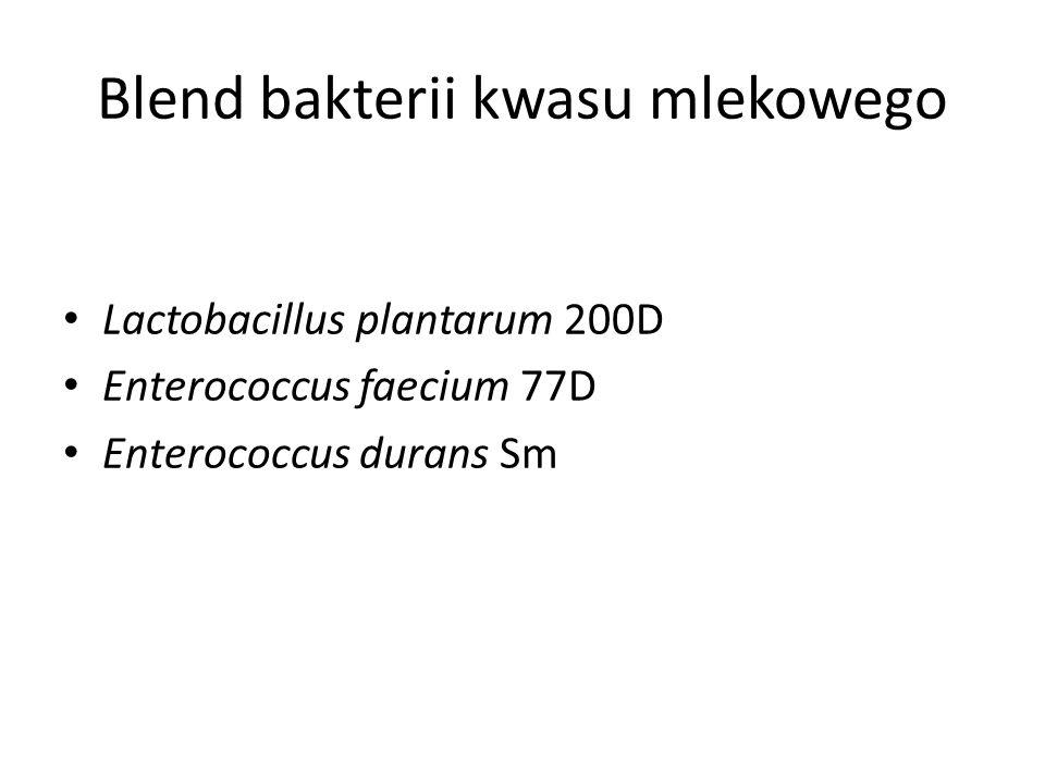 Blend bakterii kwasu mlekowego Lactobacillus plantarum 200D Enterococcus faecium 77D Enterococcus durans Sm