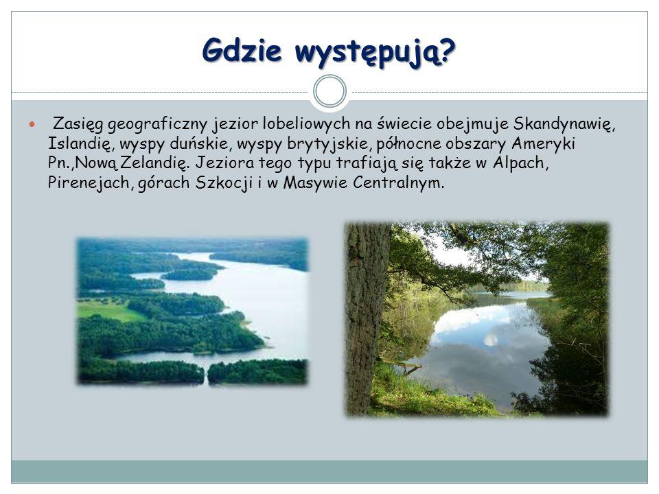 Gdzie występują? Zasięg geograficzny jezior lobeliowych na świecie obejmuje Skandynawię, Islandię, wyspy duńskie, wyspy brytyjskie, północne obszary A