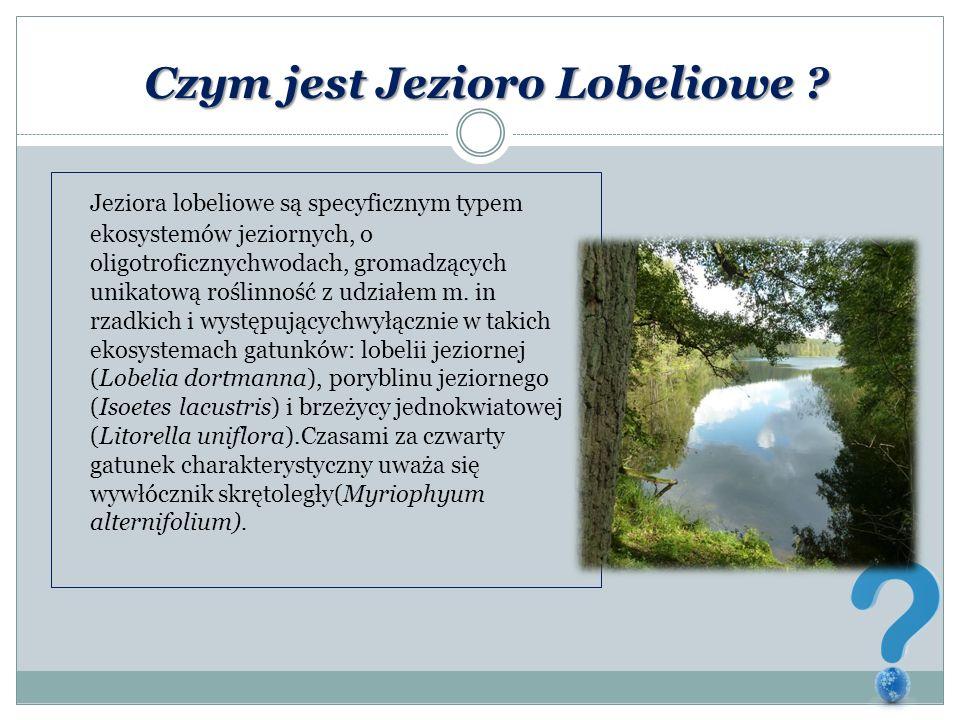 Czym jest Jezioro Lobeliowe ? Jeziora lobeliowe są specyficznym typem ekosystemów jeziornych, o oligotroficznychwodach, gromadzących unikatową roślinn