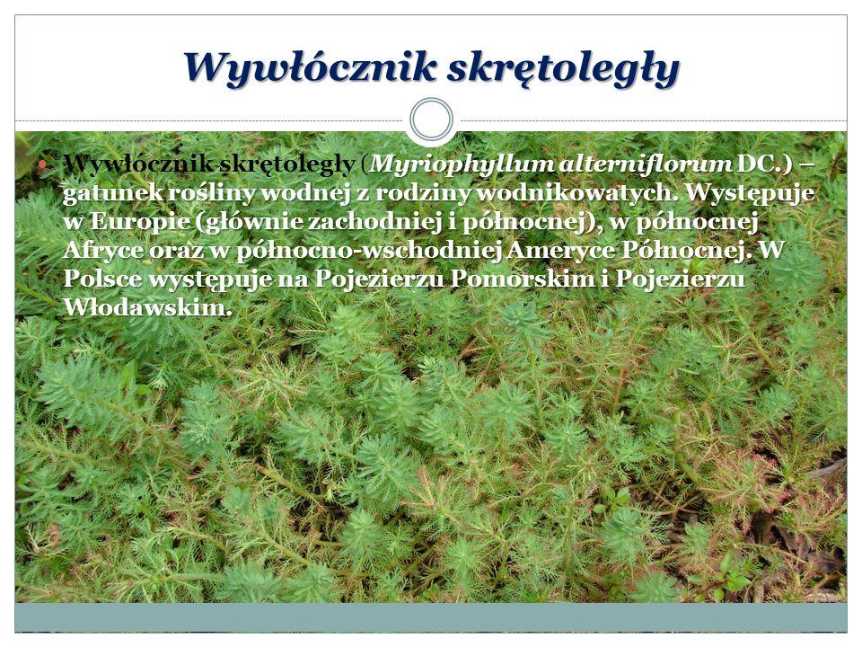 Wywłócznik skrętoległy Myriophyllum alterniflorum DC.) – gatunek rośliny wodnej z rodziny wodnikowatych. Występuje w Europie (głównie zachodniej i pół