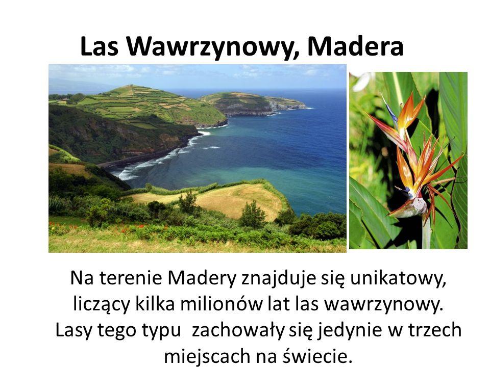 Las Wawrzynowy, Madera Na terenie Madery znajduje się unikatowy, liczący kilka milionów lat las wawrzynowy.