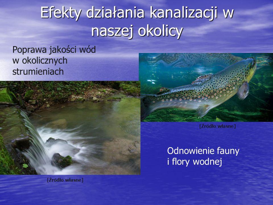 Efekty działania kanalizacji w naszej okolicy Poprawa jakości wód w okolicznych strumieniach Odnowienie fauny i flory wodnej [Źródło własne]