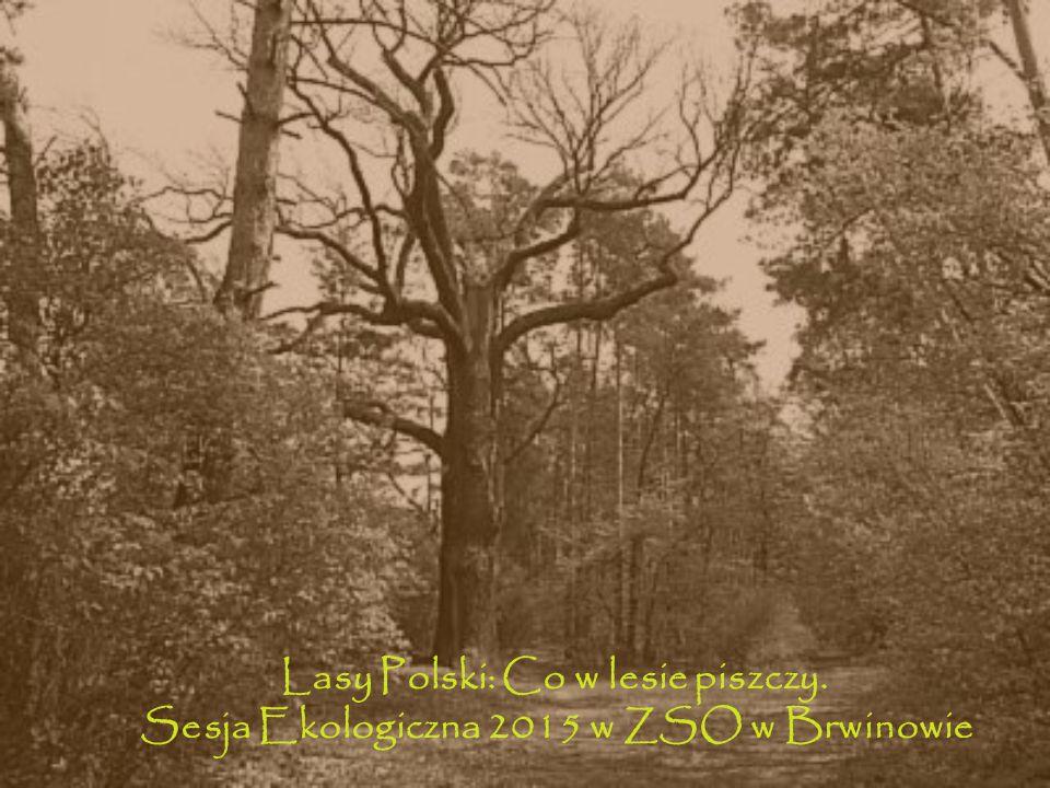 Lasy Polski: Co w lesie piszczy. Sesja Ekologiczna 2015 w ZSO w Brwinowie