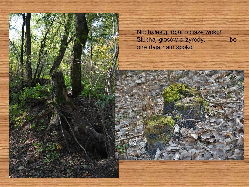 Bądź przyjacielem przyrody! Dużo uczymy się o przyrodzie, jak ją chronić i jak żyć z nią w zgodzie.