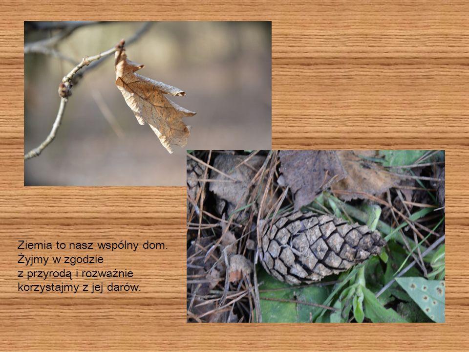 Pamiętajmy, iż las jest terenem egzystowania wielu gatunków roślin i zwierząt, więc uszanujmy ich dom.