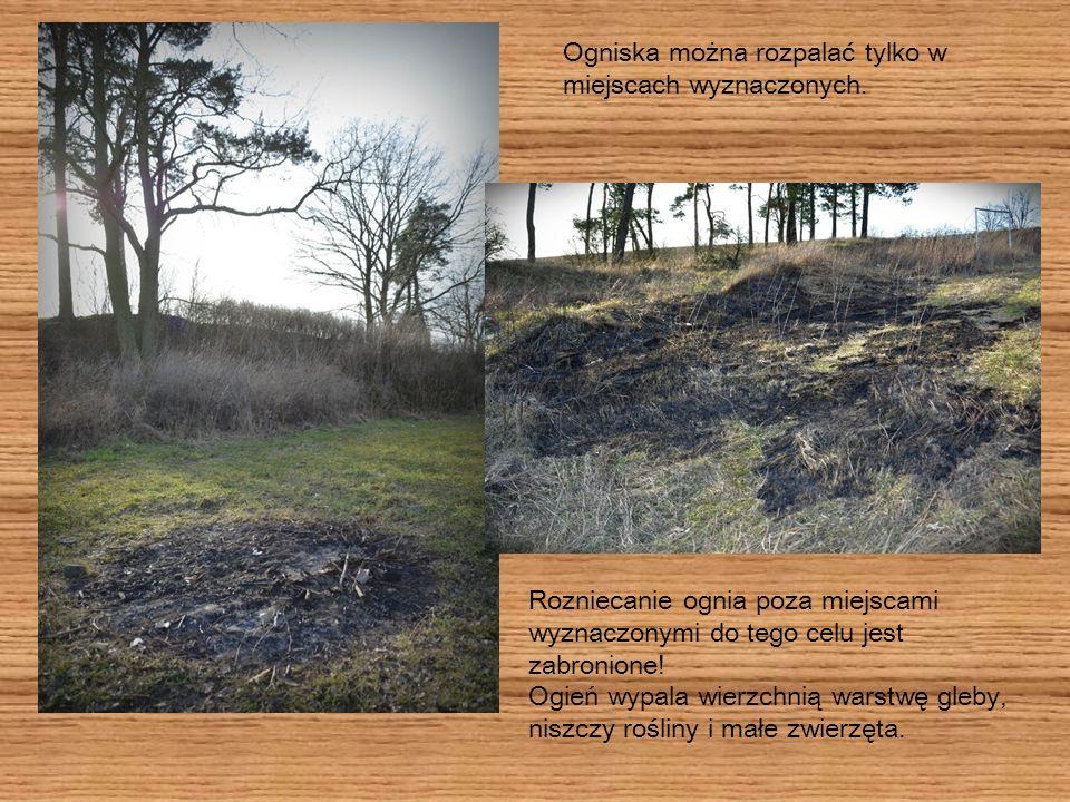 Rozniecanie ognia poza miejscami wyznaczonymi do tego celu jest zabronione! Ogień wypala wierzchnią warstwę gleby, niszczy rośliny i małe zwierzęta. O