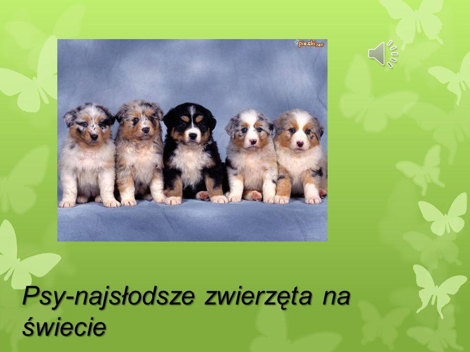 Psy-najsłodsze zwierzęta na świecie