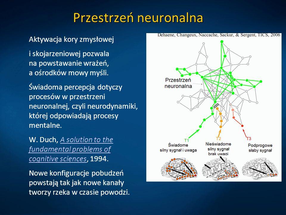 Przestrzeń neuronalna Aktywacja kory zmysłowej i skojarzeniowej pozwala na powstawanie wrażeń, a ośrodków mowy myśli.