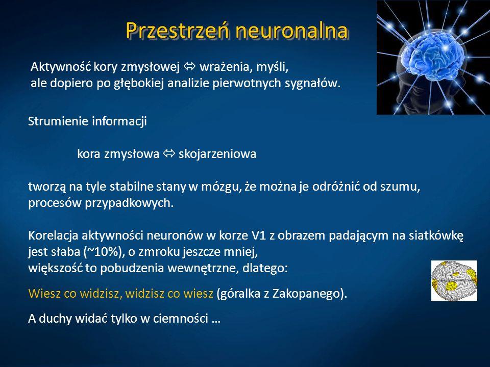 Przestrzeń neuronalna Aktywność kory zmysłowej  wrażenia, myśli, ale dopiero po głębokiej analizie pierwotnych sygnałów.