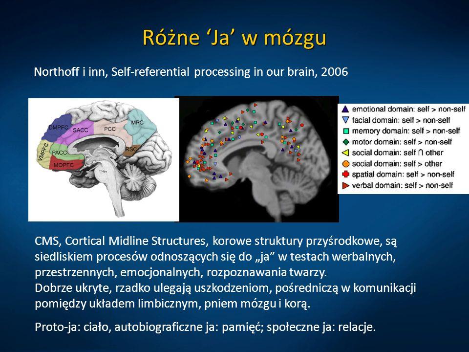 """Różne 'Ja' w mózgu Northoff i inn, Self-referential processing in our brain, 2006 CMS, Cortical Midline Structures, korowe struktury przyśrodkowe, są siedliskiem procesów odnoszących się do """"ja w testach werbalnych, przestrzennych, emocjonalnych, rozpoznawania twarzy."""