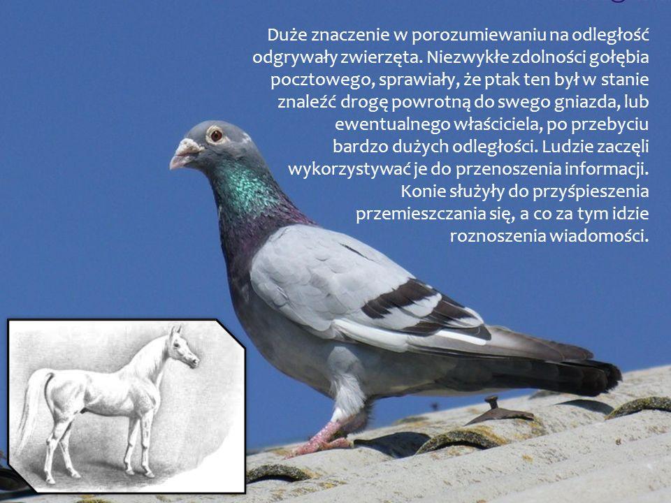 Duże znaczenie w porozumiewaniu na odległość odgrywały zwierzęta. Niezwykłe zdolności gołębia pocztowego, sprawiały, że ptak ten był w stanie znaleźć