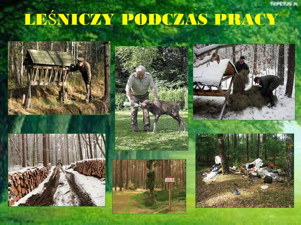 Przyjacielem lasu może być również każdy z nas Wystarczy szanować przyrodę i kochać zwierzęta