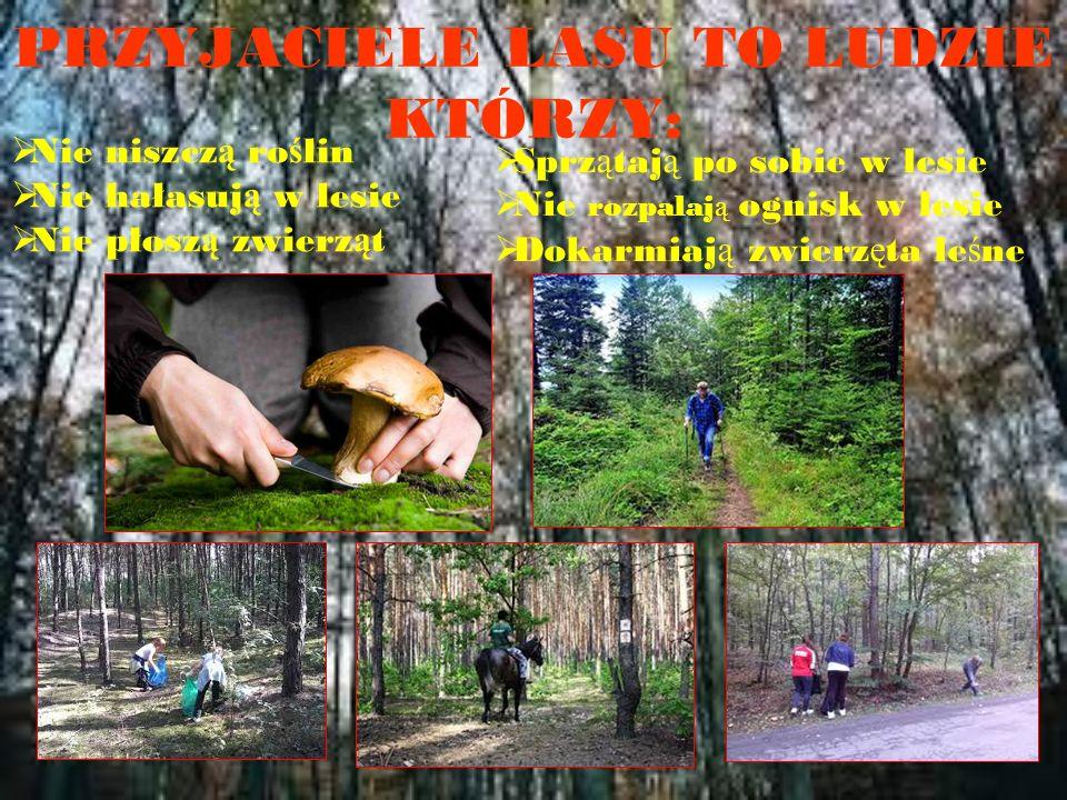 PRZYJACIELE LASU TO LUDZIE KTÓRZY:  Nie niszcz ą ro ś lin  Nie hałasuj ą w lesie  Nie płosz ą zwierz ą t  Sprz ą taj ą po sobie w lesie  Nie rozpalaj ą ognisk w lesie  Dokarmiaj ą zwierz ę ta le ś ne