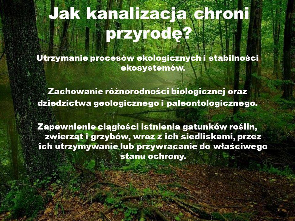 Jak kanalizacja chroni przyrodę? Utrzymanie procesów ekologicznych i stabilności ekosystemów. Zachowanie różnorodności biologicznej oraz dziedzictwa g