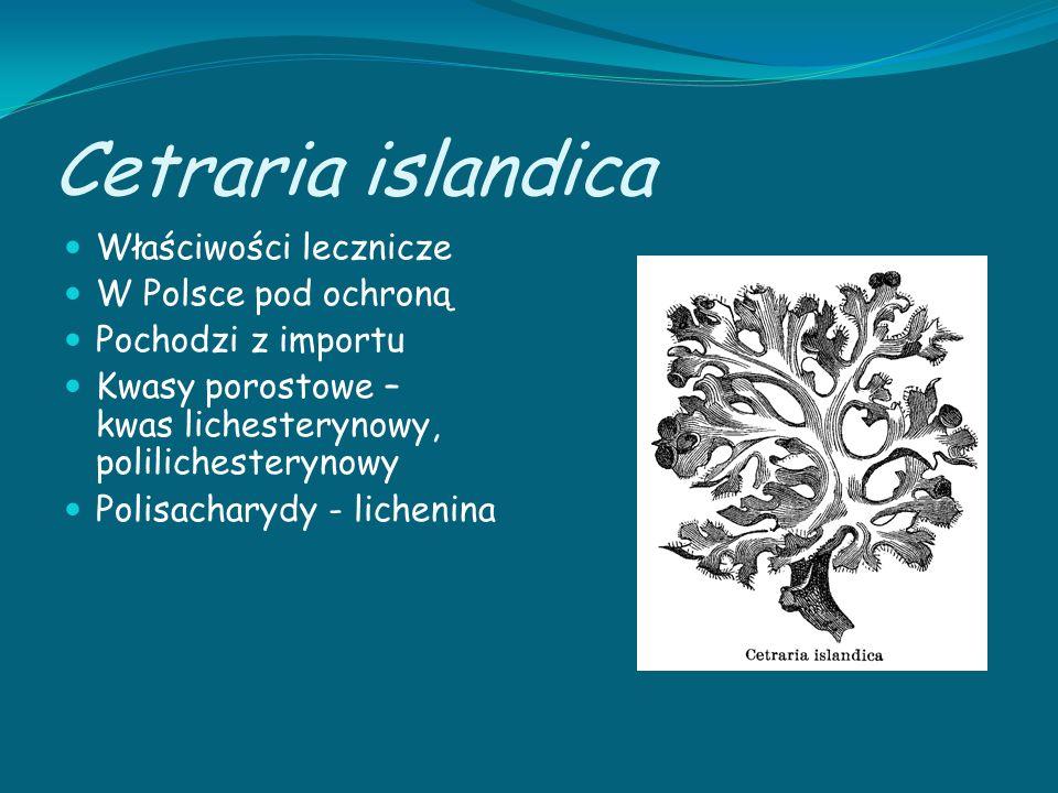 Cetraria islandica Właściwości lecznicze W Polsce pod ochroną Pochodzi z importu Kwasy porostowe – kwas lichesterynowy, polilichesterynowy Polisachary