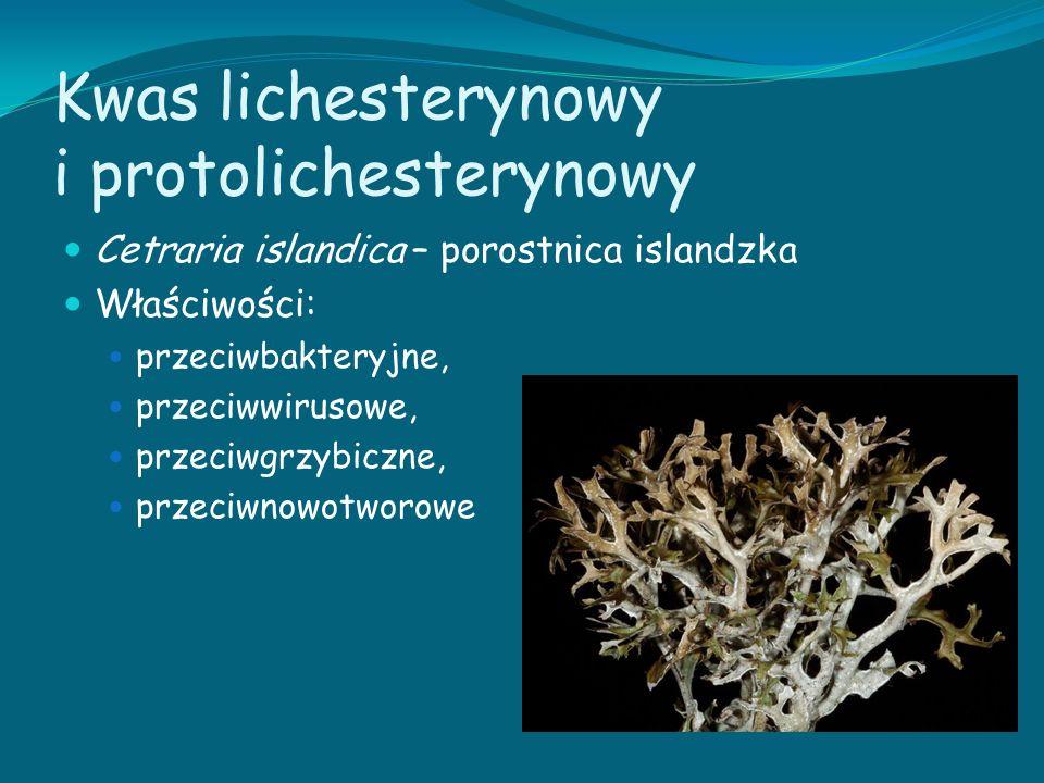 Kwas lichesterynowy i protolichesterynowy Cetraria islandica – porostnica islandzka Właściwości: przeciwbakteryjne, przeciwwirusowe, przeciwgrzybiczne