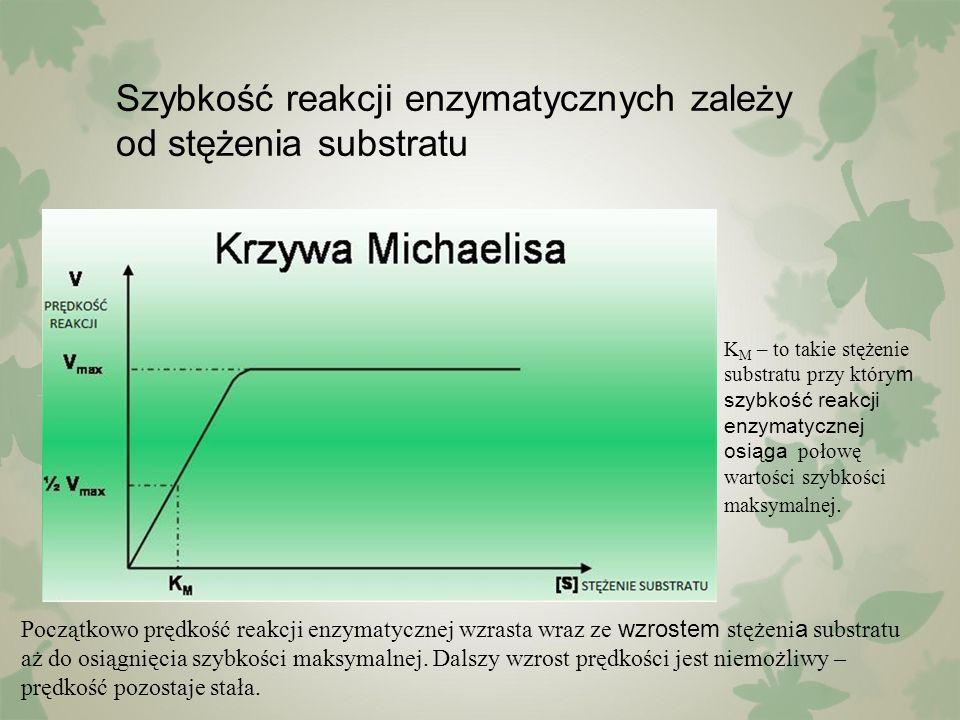 Szybkość reakcji enzymatycznych zależy od stężenia substratu Początkowo prędkość reakcji enzymatycznej wzrasta wraz ze wzrostem stężeni a substratu aż