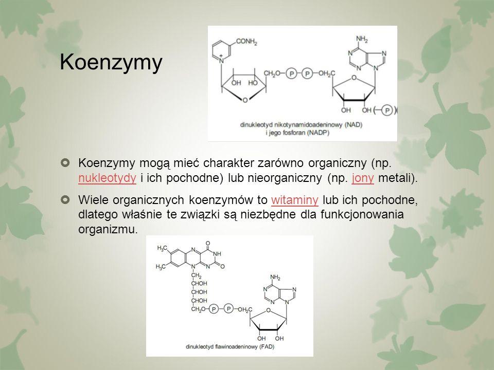 Koenzymy  Koenzymy mogą mieć charakter zarówno organiczny (np. nukleotydy i ich pochodne) lub nieorganiczny (np. jony metali). nukleotydyjony  Wiele