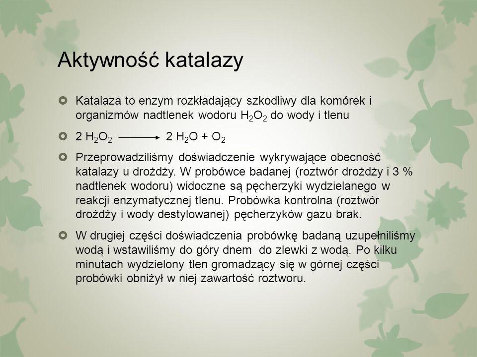 Aktywność katalazy  Katalaza to enzym rozkładający szkodliwy dla komórek i organizmów nadtlenek wodoru H 2 O 2 do wody i tlenu  2 H 2 O 2 2 H 2 O +
